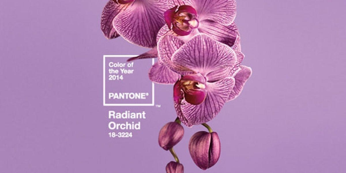 Riadiant Orchid Couleur Pantone 2014